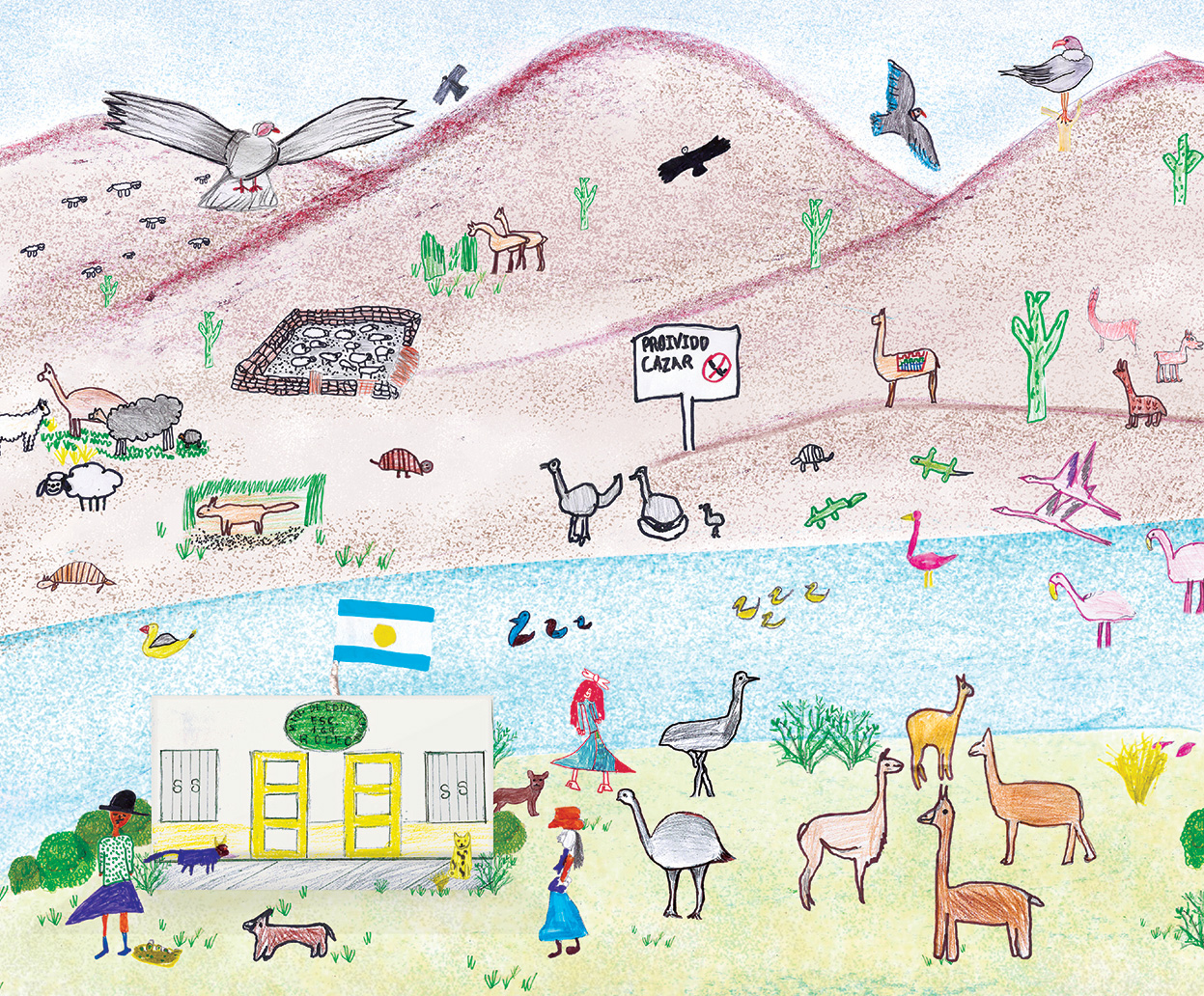 Biodiversity collage made by children of 3 schools from the Pozuelos Man and Biosphere Reserve in Jujuy. Photo by Mercedes Tregoning