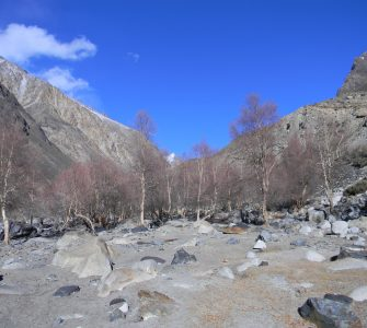 A birch forest patch in Khunjerab National Park. ©Hussain Ali, Snow Leopard Foundation