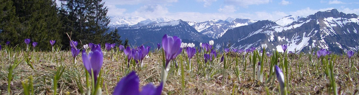 Spring in the Swiss Alps. Photo by Marlène Thibault