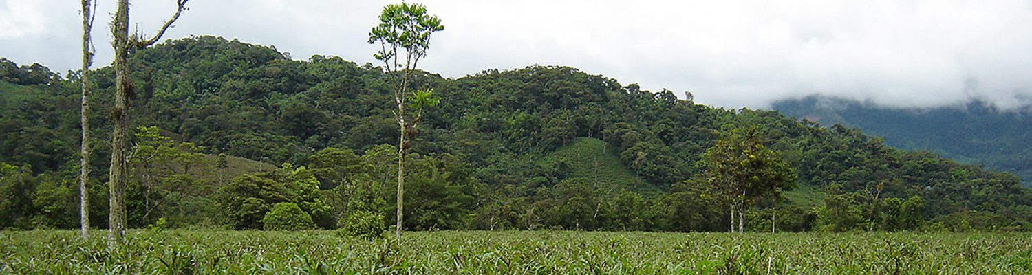 In the study area in southeastern Ecuador, the more sustainable landscapes, often shaped by indigenous peoples, occur at higher elevations while the more environmentally degrading, largely agricultural activities occur at lower elevations. Photo by Tom Rudel